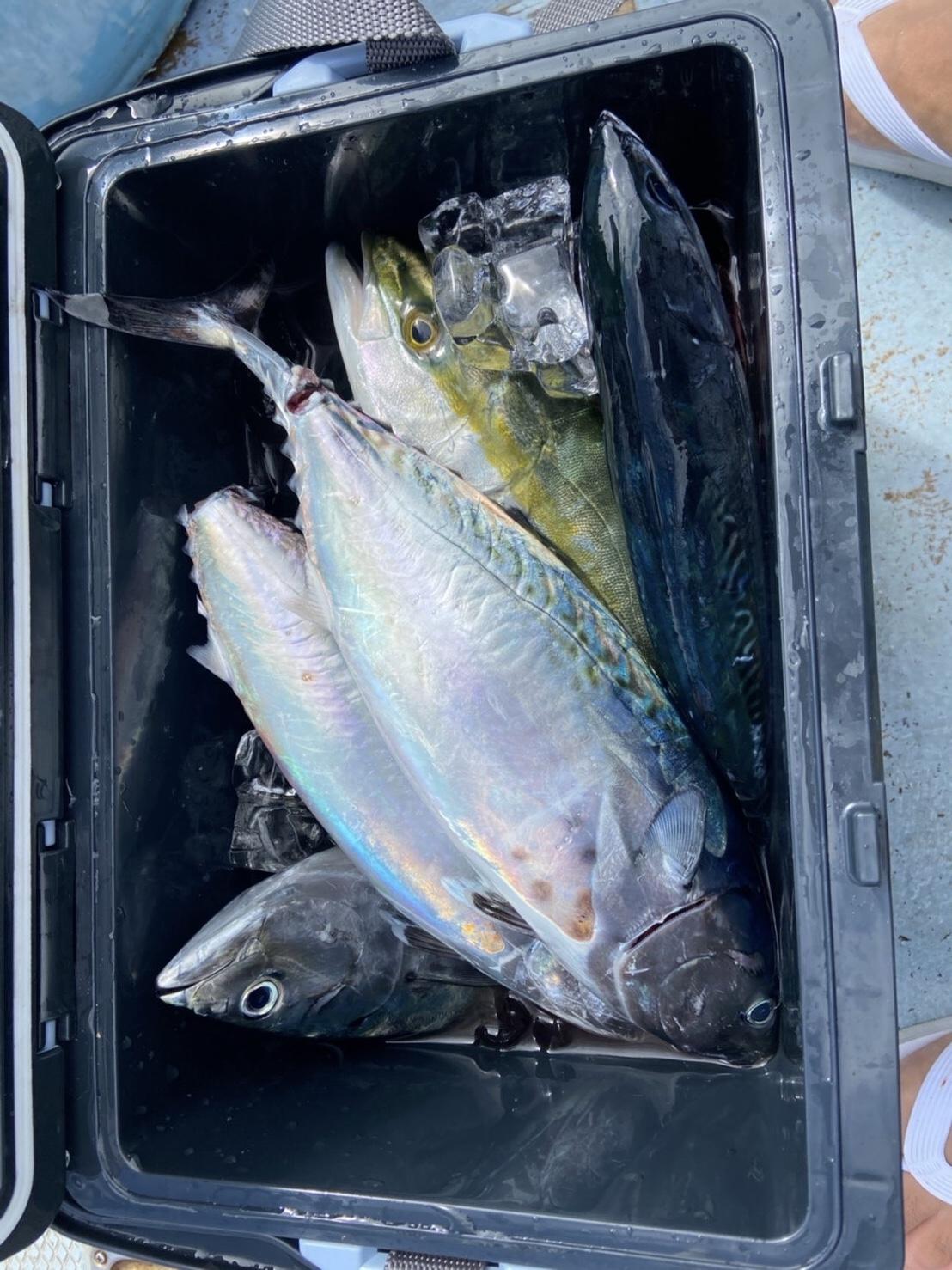 午前便、城ヶ島で船釣り体験