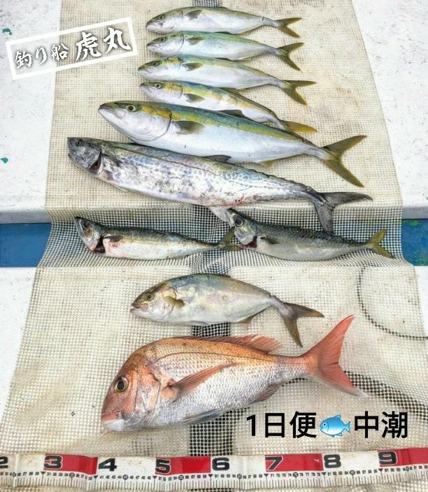 1日便【中潮】