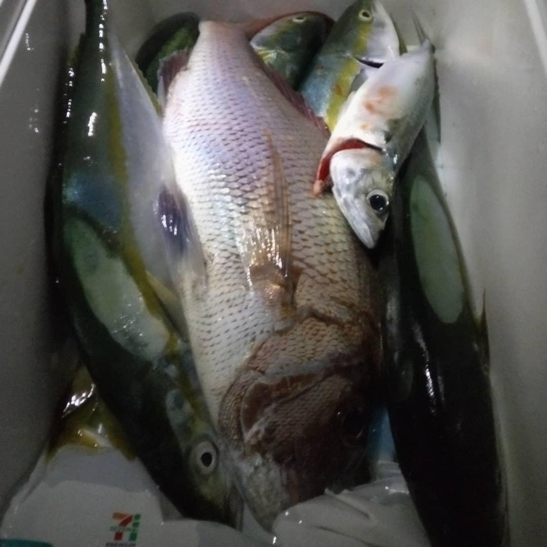 太刀魚(テンヤ&サーベリング)